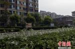 社会环境生态宜居。 陈儒 摄 - 中国新闻社河北分社