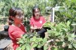 贺敬芝(右)和同学张俊娜正在监测果园的温度和湿度。记者杨梦帆文/图 - 中国新闻社河北分社