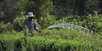 市政园林工作正在为绿地浇水。 齐红雨 摄 - 中国新闻社河北分社
